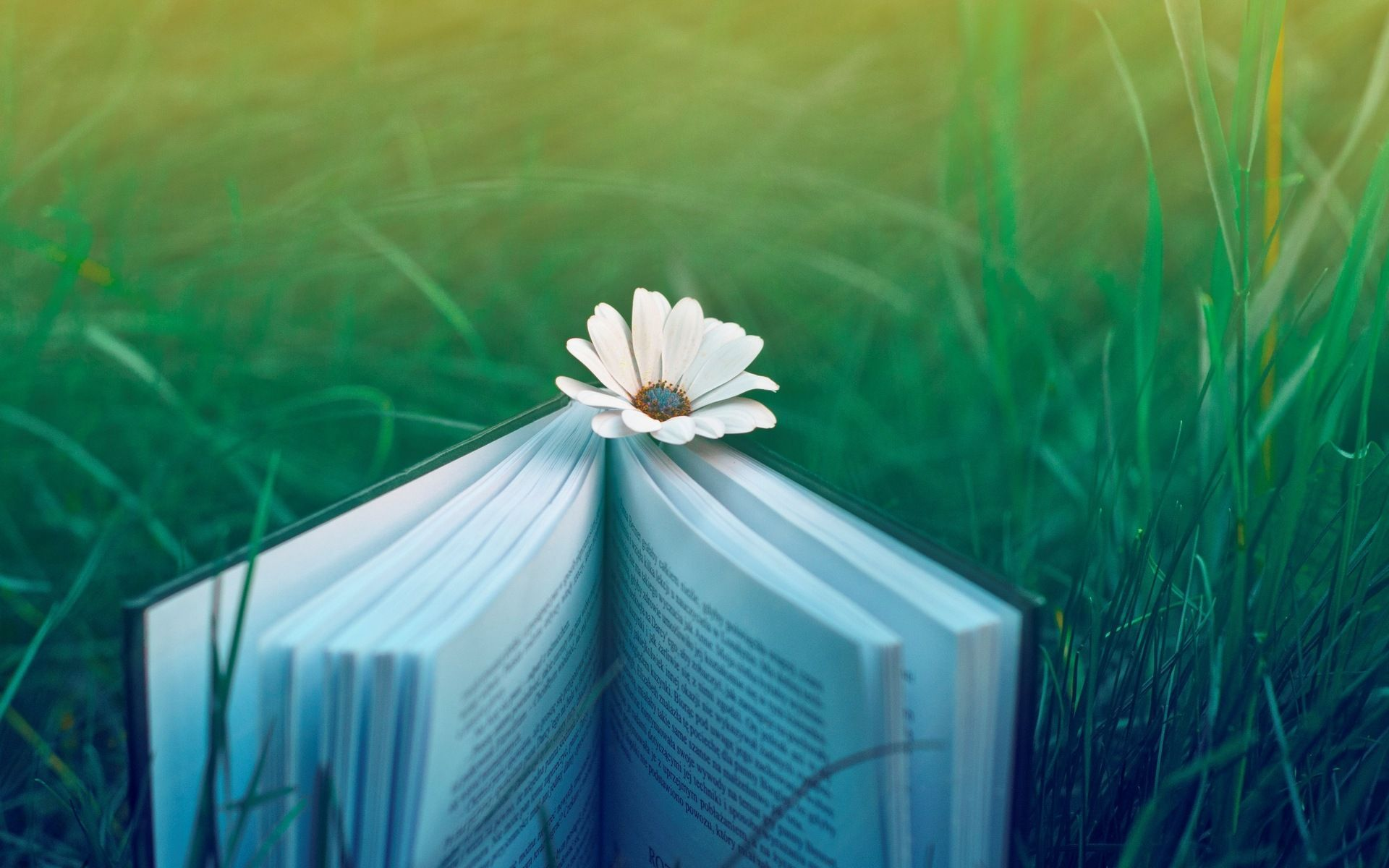 7 diferencias entre escribir relato y novela