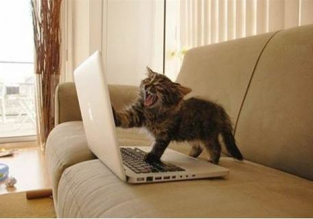angry-writer-cat 10 errores de escritura que te hacen quedar mal