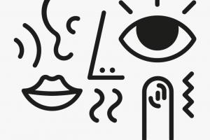 Escribir con los cinco sentidos